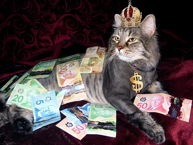 Rich lazy cat via https://pixabay.com/en/money-cat-wealth-canadian-money-1144553/