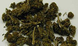 Marijuana [Public Domain]