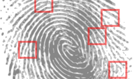 Fingerprint via http://pixabay.com/en/fingerprint-detective-criminal-146242/