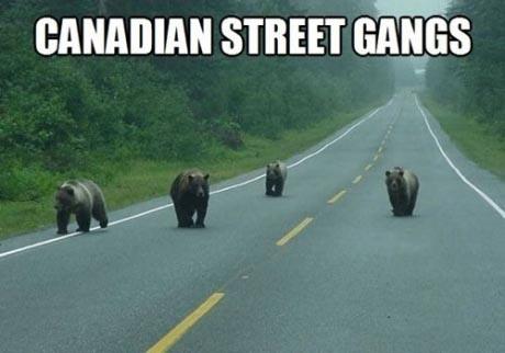 Canadian Street Gang meme from http://www.fullredneck.com/25-funny-canada-memes/