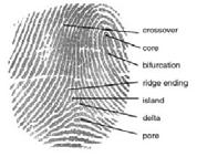 Fingerpint by DoD_Biometrics_Consortium_Conference_13_Sep_2007.pdf: UnknownUnknown derivative work: Geo Swan [Public domain], via Wikimedia Commons